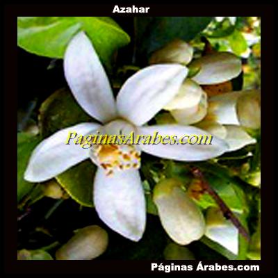 azahar_00334_a
